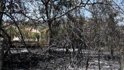 Βαρυμπόμπη - Η εξάπλωση της φωτιάς σε βίντεο 30''