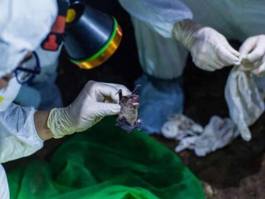 Επιστήμονες της Wuhan παραδέχονται ότι τους είχαν δαγκώσει νυχτερίδες με κορωνοϊό