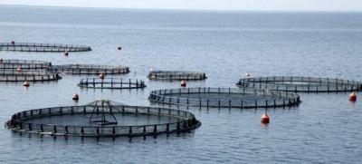 Έρχεται Δημόσια Πρόταση για έξοδο των μετοχών του Νηρέα και της Σελόντα και η εταιρεία Mubadala