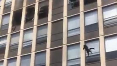 Η απίστευτη προσγείωση γάτας από τον 5ο όροφο κτιρίου που φλέγεται - Έμειναν όλοι έκπληκτοι