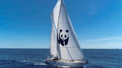 WWF «30 by 30»: Αναγκαία η προστασία του 30% της Μεσογείου για την ανάκτηση των αλιευμάτων