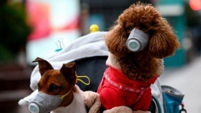 Επιστήμονες προειδοποιούν: Εμβολιασμός κατά του κορωνοϊού και σε... σκύλους, γάτες