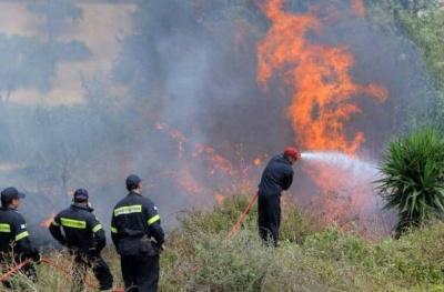 Πυρκαγιά σε δασική έκταση στη Σιθωνία Χαλκιδικής - Ισχυρή η πυροσβεστική δύναμη