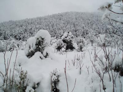 Διακοπή κυκλοφορίας στη Λεωφόρο Πάρνηθας λόγω χιονόπτωσης