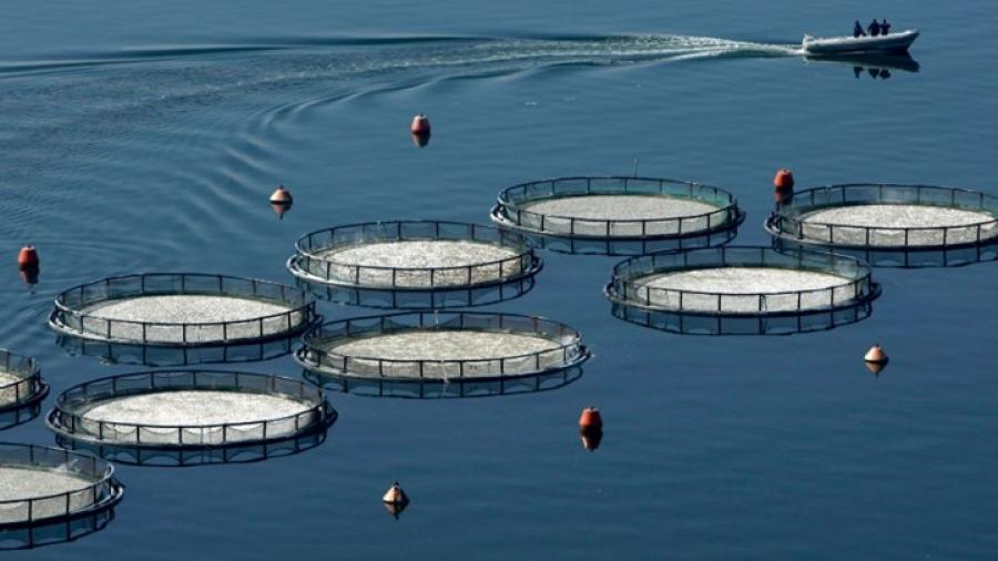 AVRAMAR: Μία φρέσκια αρχή για τη μεσογειακή ιχθυοκαλλιέργεια