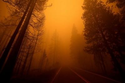 Ακαδημία Αθηνών: Σύσταση Επιτροπής για την ανθεκτικότητα των δασών στις πυρκαγιές υπό τον καθηγητή Ζερεφό