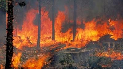 Πυρκαγιά στον Αυλώνα Αττικής - Δεν κινδυνεύουν κατοικημένες περιοχές