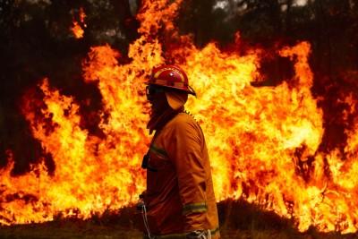 Αυστραλία: Τρία δισεκατομμύρια ζώα κάηκαν ή εκτοπίστηκαν στις καταστροφικές πυρκαγιές