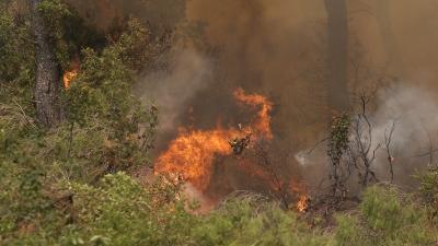 Εύβοια – Μάχη με τις φλόγες: Οργανώνεται η εκκένωση της Αγίας Άννας – Γραμμή άμυνας να μην φτάσει η φωτιά στη θάλασσα