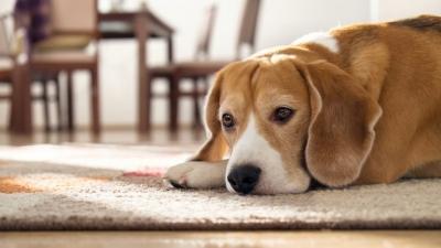 Κορωνοϊός: Η βρετανική μετάλλαξη εντοπίστηκε σε σκύλους, γάτες - Η πρώτη φορά που ανιχνεύεται και σε ζώα