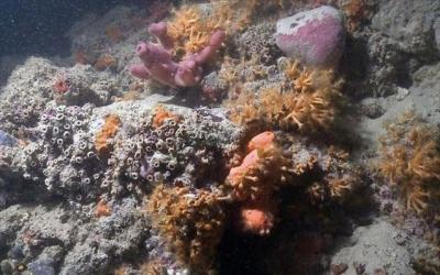 Στην Ιταλία ο πρώτος κοραλλιογενής ύφαλος στη Μεσόγειο!
