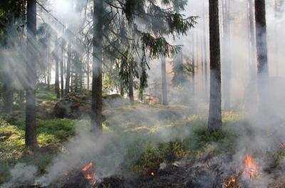 Πυροσβεστική: Πολύ υψηλός κίνδυνος πυρκαγιάς αύριο (21/7) σε 4 περιφέρειες