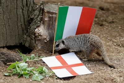EURO 2020: Οι… σουρικάτες του Λονδίνου φανέρωσαν το νικητή του Ιταλία-Αγγλία