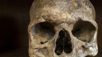 Οστό που μοιάζει με ανθρώπινο κρανίο εντοπίστηκε σε αποθήκη στα Βίλια