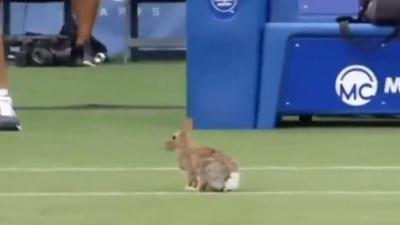 Λαγός… διέκοψε αγώνα τένις! (video)