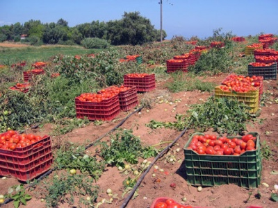 Αντιμέτωπη με ελλείψεις αγροτικών προϊόντων θα βρεθεί σύντομα η βόρεια Ευρώπη λόγω κορωνοϊoύ